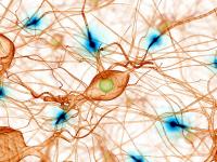 neurotransmisores-invert