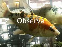 04-observa